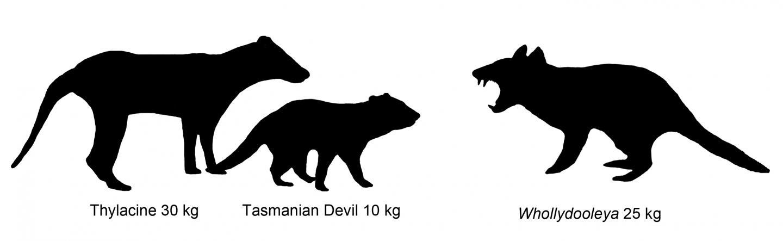 Comparison of Marsupial Size