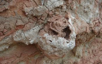A 25-Million-Year-Old Termite Nest