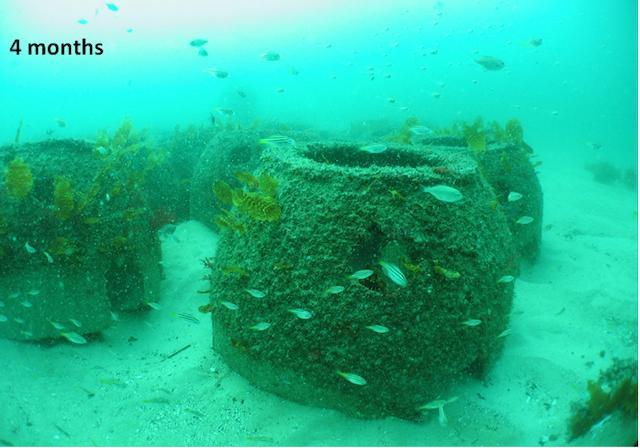 Artificial Reefs at Four Months