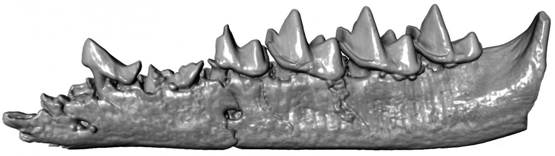 3D Jawbone
