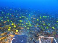 High Diversity and Endemism