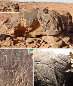 Camel tool marks
