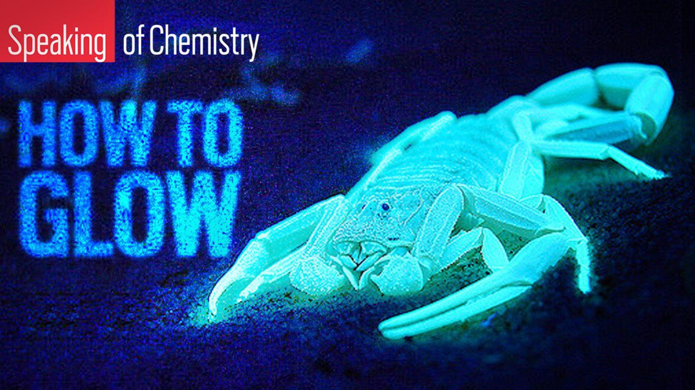 How Animals Glow