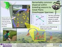 Within-season Breeding Dispersal
