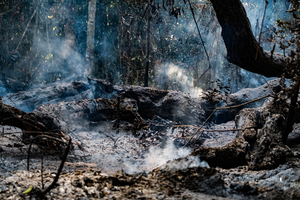 Downed trees left smoldering after succumbing to a forest fire