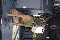 Canine in Flight