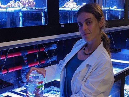 Fixing the Role of Nitrogen in Coral Bleaching