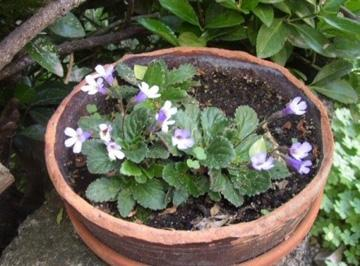 Drying without Dying: How Resurrection Plants Survive without Water (1 of 3)