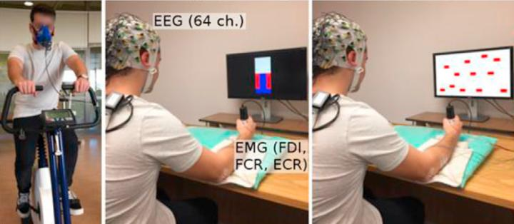 Exercise Increases Brain Efficiency and Connectivity