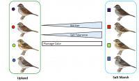 Saltmarsh Sparrows Graphic