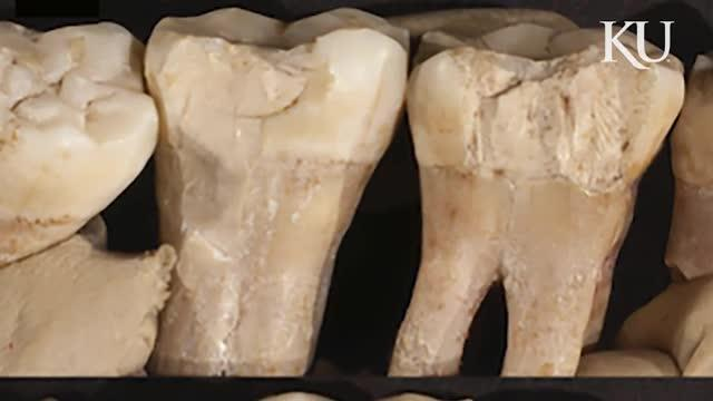 Researchers Find Evidence of Neanderthal Dentistry