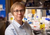 Karin Forsberg Nilsson, Professor at Department of Immunology, Genetics and Pathology, Uppsala University
