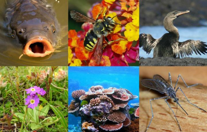 Examples of Organisms that May Be Particularly at Risk of Losing Fertility Due to High Temperatures