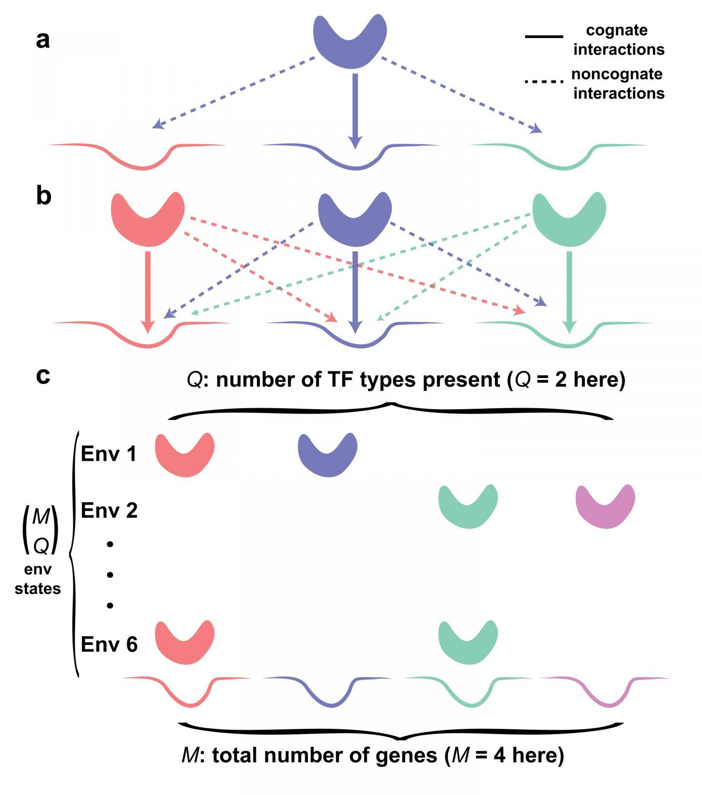 Crosstalk in Gene Regulation