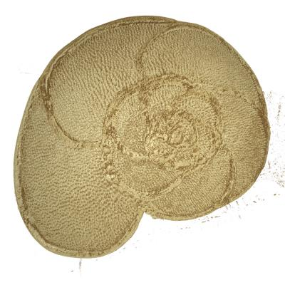 CT Reconstruction of a Foram Measured at the Diamond Light Source (1 of 2)