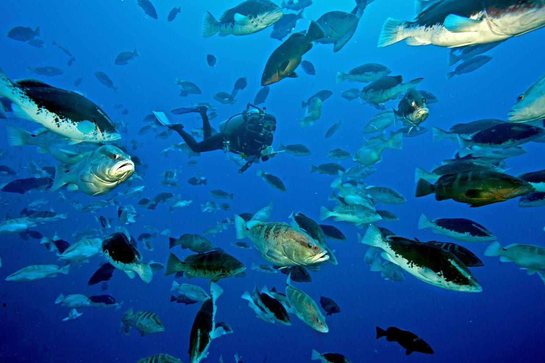 Nassau Grouper Aggregation