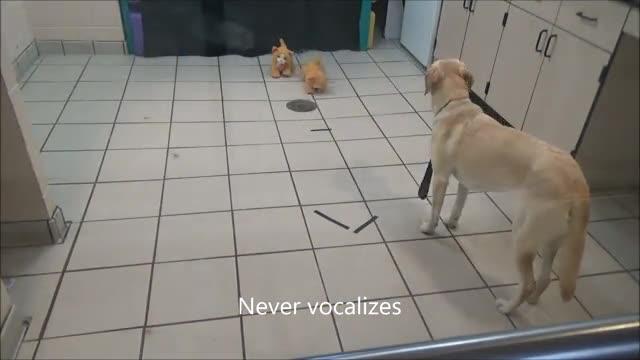 Behavioral Tests That Predict Guide Dog Success 2