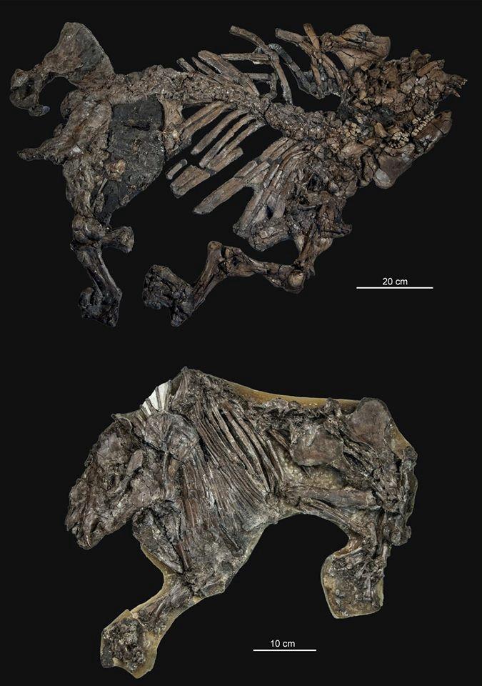 Fossilized Skeletons