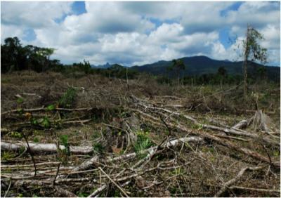 Narco-Deforestation