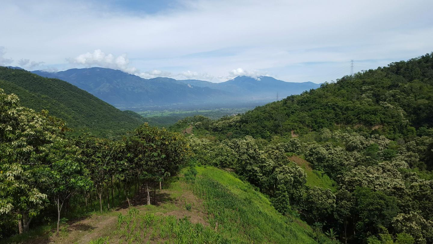 Landscape with mountains and sky in background - lush and green in foreground