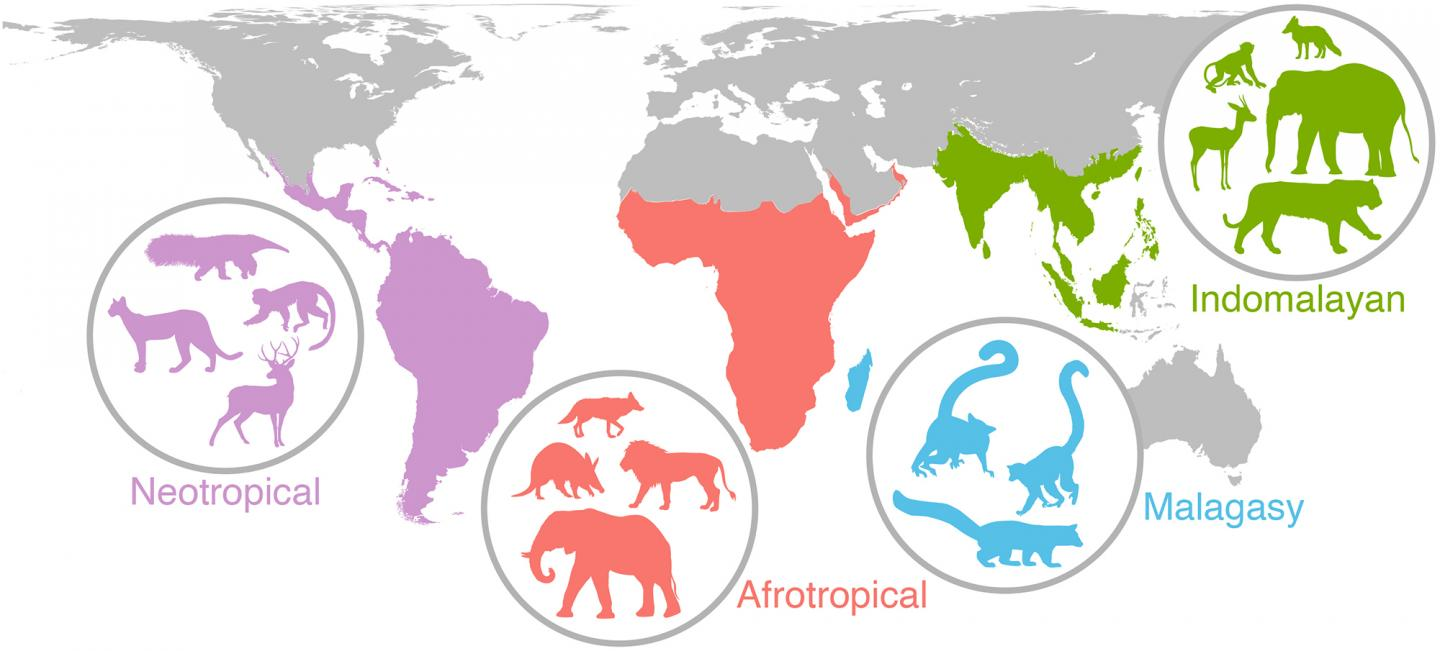 Ancient Events and Mammal Biodiversity