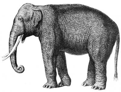 Hair Untangles Woolly Mammoth Puzzle (3 of 3)