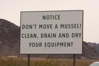 Don't Move a Mussel