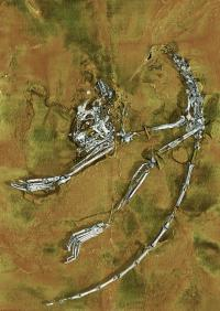 3-D Representation of Earliest Primate Fossil