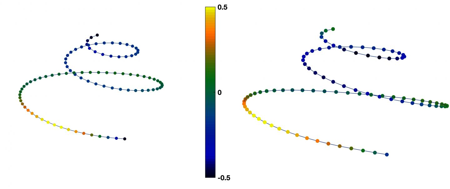 Average Female and Male Shapes for the Cochlear Spiral Curve