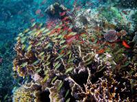 Incredible Philippine Reef Diversity