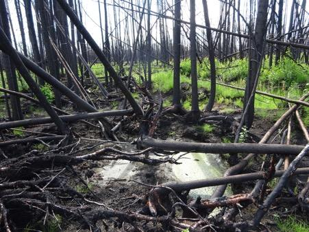 Heavily Drained Bog