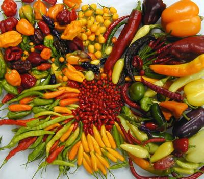 Varieties of 4 Domesticated Chiles