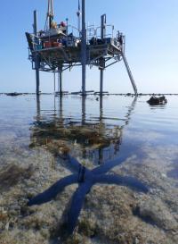 Starfish below Rig
