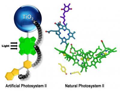 An Artificial Photosynthetic Reaction Center
