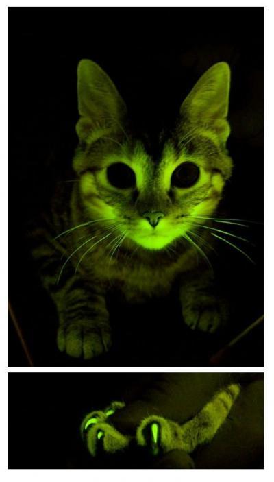 Glowing Cat Image