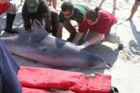 Riverhead Foundation with Stranded Dolphin