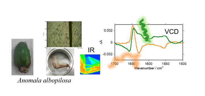 Mapping of Supramolecular Chirality in Insect Wings by Microscopic Vibrational Circular Dichroism Spectroscopy
