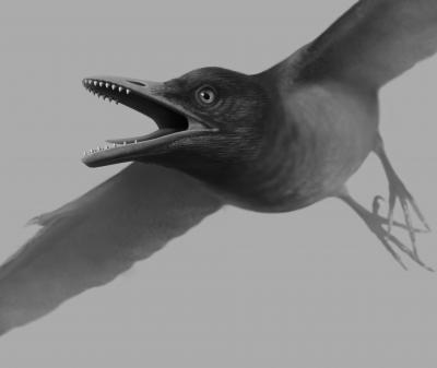 Artist's Reconstruction of <i>Sulcavis geeorum</i> in Flight