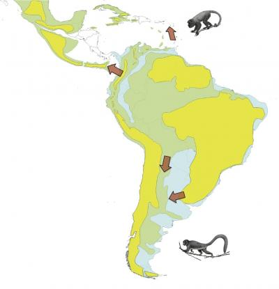 Monkey Migration Out of the Amazon Basin