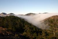 Fog Rolls in through a Valley on Santa Cruz Island, Reaching a Forest of Bishop Pine Trees