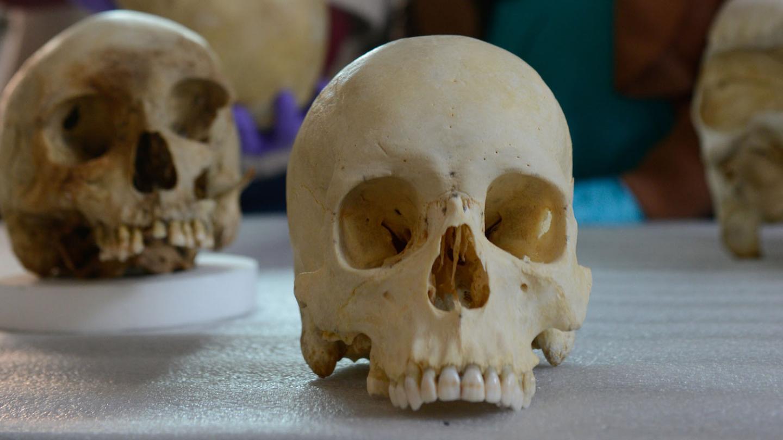 Skulls in the lab