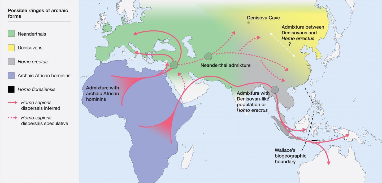 Hominin Distribution Map