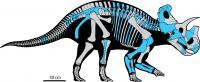 <em>Wendiceratops</em> Skeleton Reconstruction