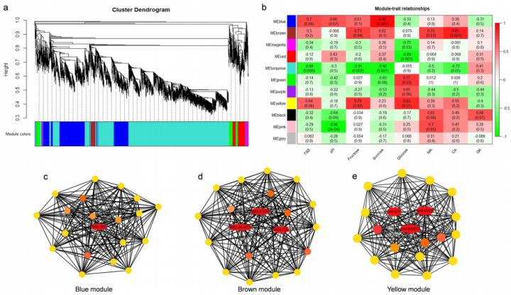 The regulatory network of sugar and organic acid in watermelon fruit is revealed