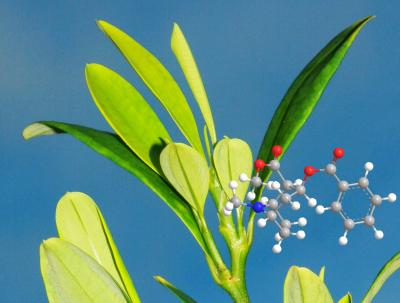 Coca Plant and the Molecular Structure of Cocaine