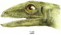 Artistic reconstruction of Silesaurus