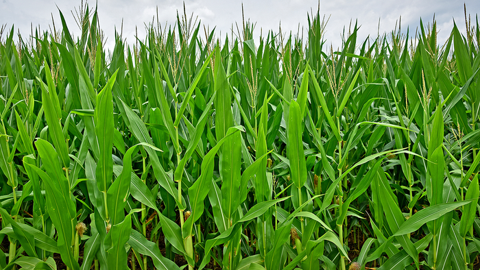 Crop Insurance and Unintended Consequences