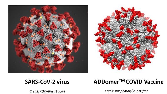 SARS-CoV-2 virus alongside ADDomer COVID vaccine