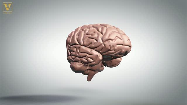 Suzana Herculano-Houzel: Lifespan and Sexual Maturity Depends on Your Brain More Than Your Body