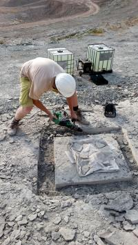 Jelle Heijne Recovering a Fish Fossil